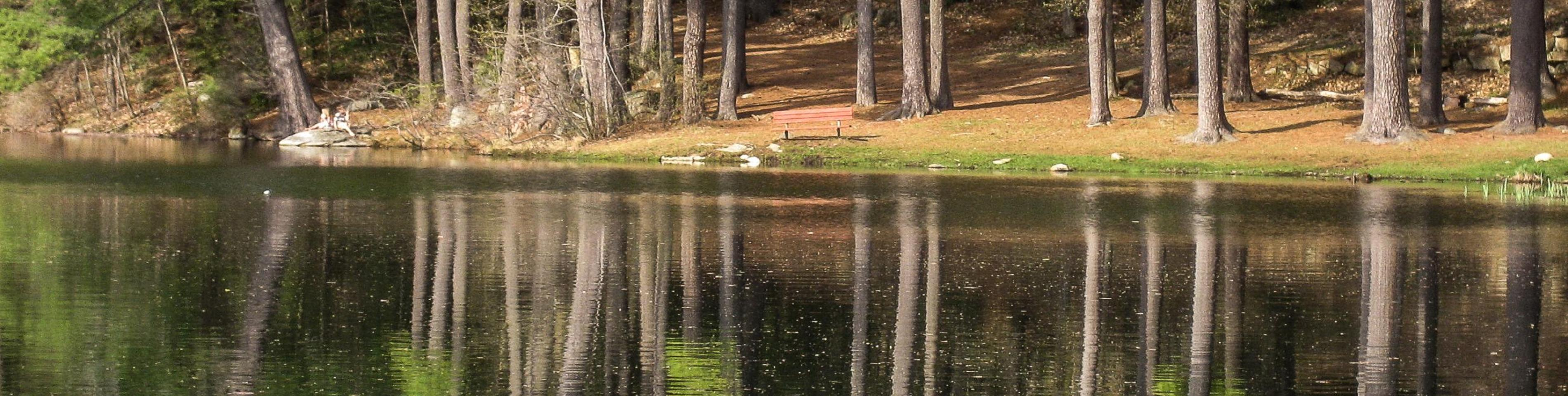 Robin Hood Pond
