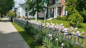 Downtown Sidewalk and Flowers