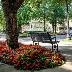 downtown bench flowers photo